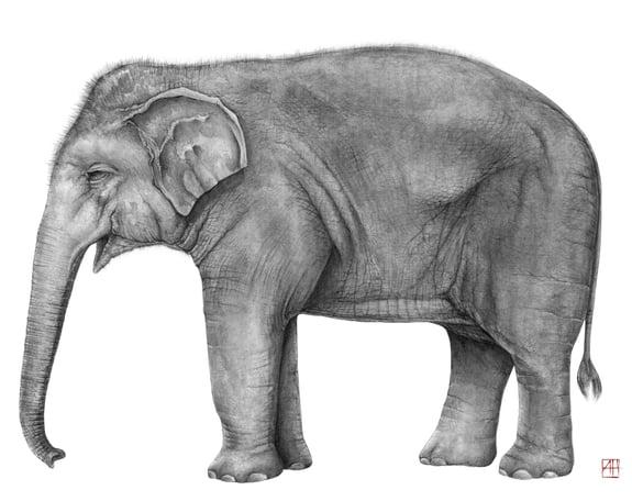 andrew_howells_elephant2