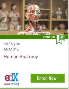 Link To Human Anatomy from HKPolyUx